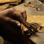 New Treaty Aims to Combat Illicit Tobacco Trade